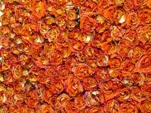 背景美丽的花卉玫瑰 库存图片