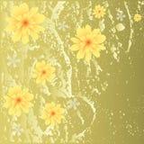 背景美丽花卉 免版税图库摄影
