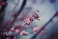 背景美好的例证春天向量 免版税图库摄影