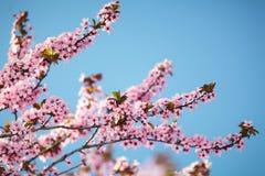 背景美好的例证春天向量 库存图片