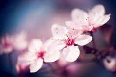 背景美好的例证春天向量 图库摄影