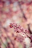 背景美好的例证春天向量 库存照片