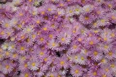 背景美好的束五颜六色的花卉花粉红色 库存照片