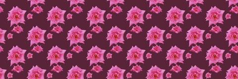背景美好的粉红色上升了 库存照片