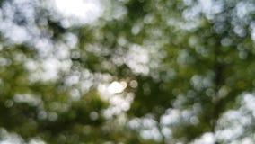 背景美好的绿色本质 太阳通过吹发光在风绿色叶子 影视素材