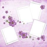 背景美好的花卉粉红色 免版税库存照片