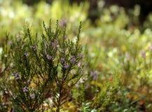 背景美好的花森林例证光 库存图片