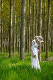 背景美好的花森林例证光 库存照片