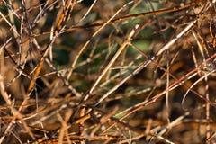 背景美好的草丛横向 库存照片