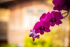 背景美好的被创建的兰花粉红色ps 免版税库存照片
