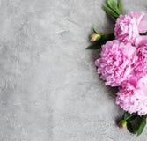 背景美好的装饰花牡丹粉红色春天 免版税图库摄影