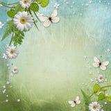 背景美好的雏菊生态 免版税库存照片
