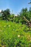 背景美好的雏菊草甸春天 库存图片