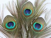 背景羽毛孔雀白色 免版税库存图片