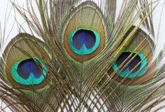 背景羽毛孔雀白色 库存图片