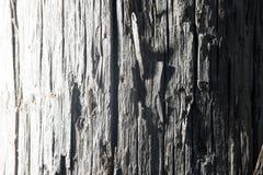 背景老木 免版税库存照片