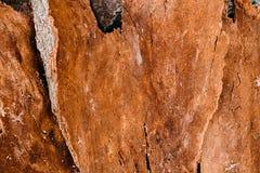 背景老纹理木头 吠声木使用纹理作为自然本底的 免版税库存图片