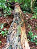 背景能金刚石表单grunge照片使用的木头 12个背景中心重点grunge mp有选择性的木头 库存图片