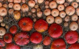 背景自然南瓜秸杆不尽的行,橙色样式秋天 库存照片
