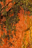 背景自然湿橙色石墙纹理 免版税图库摄影
