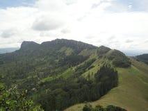 背景自然 免版税库存照片