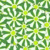背景花卉例证向量 纺织品和墙纸的无缝的样式 库存例证