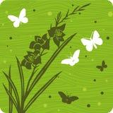 背景花卉例证 库存照片