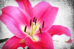 背景花卉减速火箭 库存图片