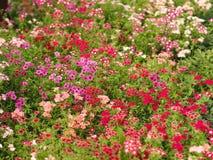 背景花卉多彩多姿 库存图片