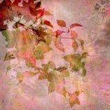 背景花卉桃红色葡萄酒 库存照片