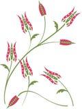 背景花卉模式郁金香 图库摄影