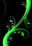 背景花卉绿色 免版税库存图片