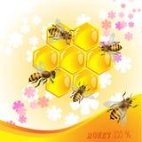 背景花卉蜂蜜 免版税库存图片