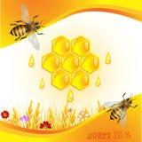 背景花卉蜂蜜 免版税图库摄影