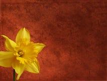 背景花卉grunge 库存照片