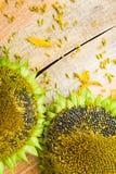 背景花向日葵种子木工作台面 免版税库存照片