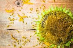 背景花向日葵种子木工作台面 免版税库存图片