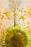 背景花向日葵种子木工作台面 库存照片