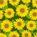 背景花无缝的向日葵 库存图片