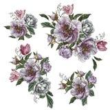 背景花束拟订装饰花卉花例证二向量 花设置了水彩牡丹、玫瑰和郁金香 图库摄影