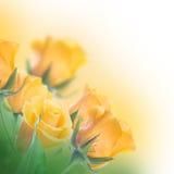 背景花束查出的玫瑰空白黄色 免版税图库摄影