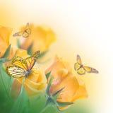 背景花束查出的玫瑰空白黄色 库存图片