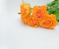 背景花束玫瑰空白黄色 免版税库存照片