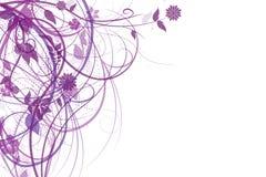 背景花紫色白色 免版税库存图片