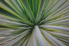 背景苏铁科的植物 免版税库存照片