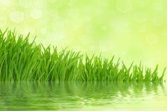 背景草绿色光反射 免版税图库摄影