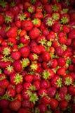 背景草莓 免版税图库摄影