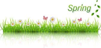 背景草绿色春天 库存图片