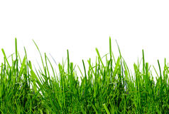 背景草绿色白色 库存照片