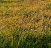 背景草 黄绿色 图库摄影